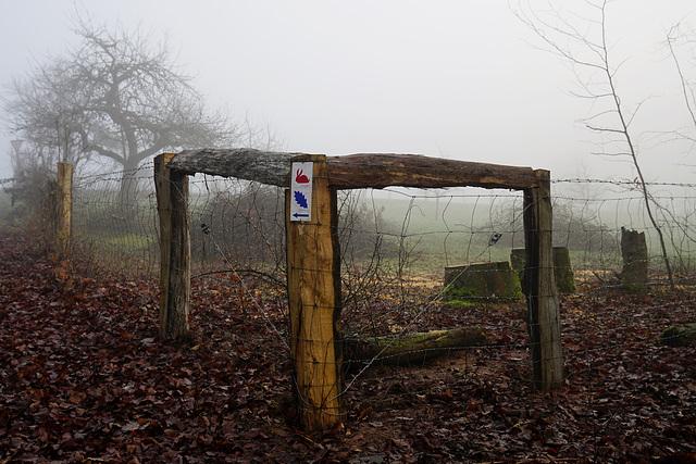 Orientierung im Nebel - Orientation in fog - HFF