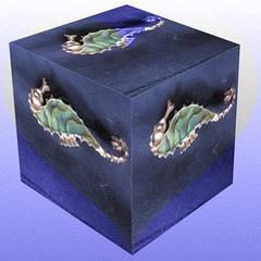 Seahorses Box.