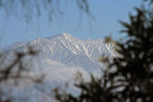 Mt San Jacinto May 17 2015 (5204)