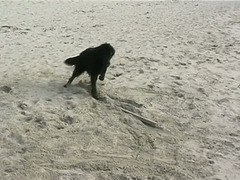 Missy at the beach (2)