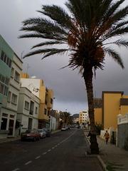 Palm tree parking?