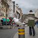 Seagull, Liverpool city centre