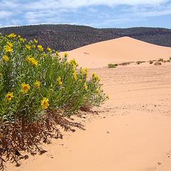 USA - Utah, Coral Pink Sand Dunes State Park