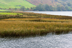 The reed beds at Botherswater