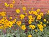 Blumenschmuck an einer Hauswand