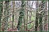 Maze of Trees.