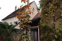 L'automne chez moi