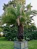 Hortus Botanicus 2018 – Palm
