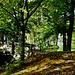 Der Herbst beginnt - Autumn is coming