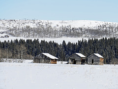 Old barns in the foothills