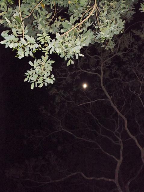 Feuillage lunaire / Moon foliage