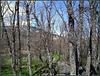 Encinas, El Escorial