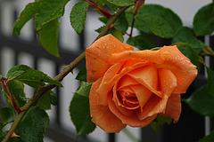 Ein ziemlich nasser Herbstgruß - A pretty wet autumn greeting - HFF