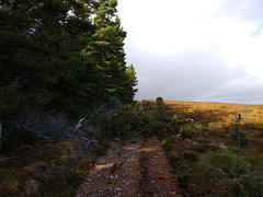 Storm damage on the Carn Daimn path