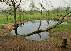 Pistol Pond, looking towards Alderley Edge.
