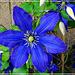 """Mon côté """"fleur bleue"""""""