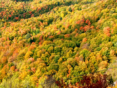 Autumn weaving