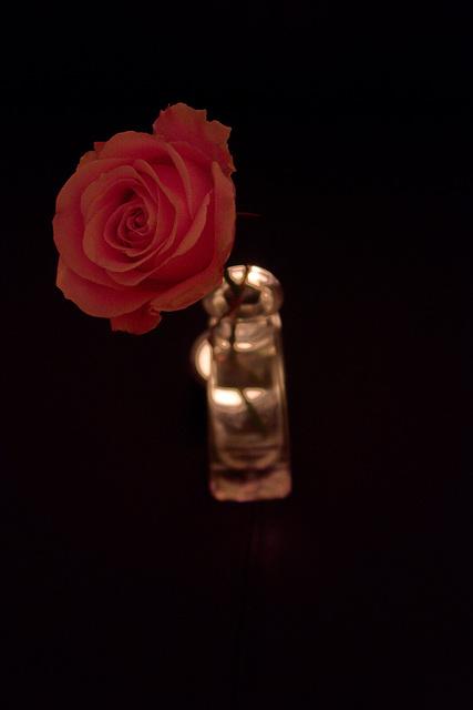 Rose 31/50 : Sister Morphine