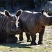 Mutter und Tochter Panzernashorn - Mother and daughter Indian rhinoceros