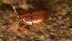 BeetleIMG 1460v2