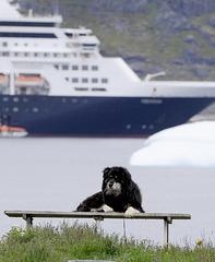 Dog in Nanortalik, Greenland