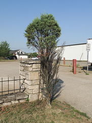 "Ornamental juniper & ornamental fence: ""Welcome to the parking lot!"""