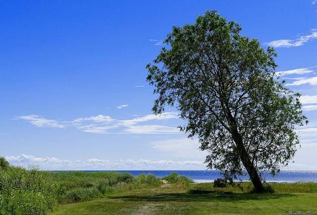 am Peipsi järv (Peipus-See), Blick nach Russland (© Buelipix)