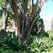 Valencia: jardines de Monforte, 8