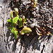 Alter Baum im Frühling