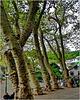 Funchal : Giardino botanico al Monte