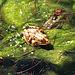La rana encantada, 3