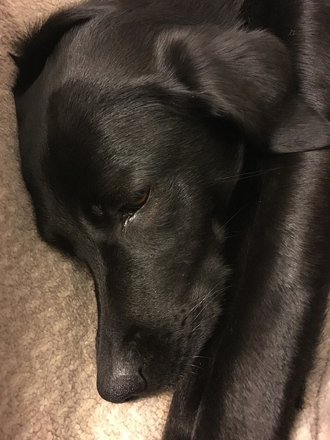 Mala ist müde