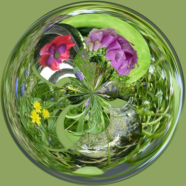Wild Flowers orb