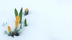 Ob Schnee oder Frost-