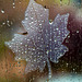 Leaf Decal with Water Drops