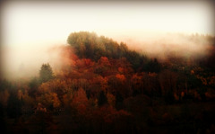 Brumes du soir / Evening mist