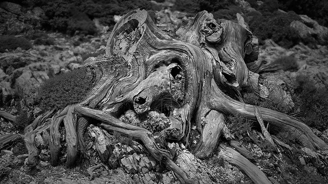 nightmare_roots