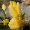 Des tulipes...