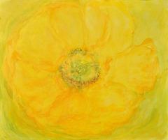 Gelbe Mohnblume
