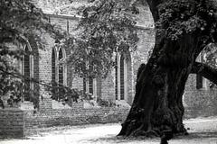 Oude Linde bij 't Klooster