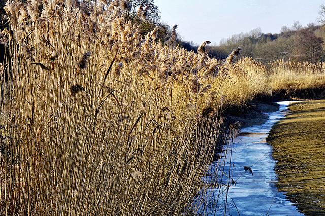 Winter am Fischweiher - Winter at the fish pond