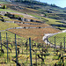 Short inspection: the 2021 wine is growing.  :-)