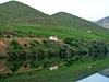 Douro Reflections