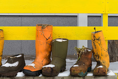 Wellie Fence