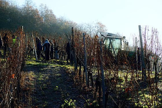 Der Wein, der aus der Kälte kommt - The wine, which comes from the cold