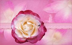 "my fairytale rose ""nostalgie"" ♥"
