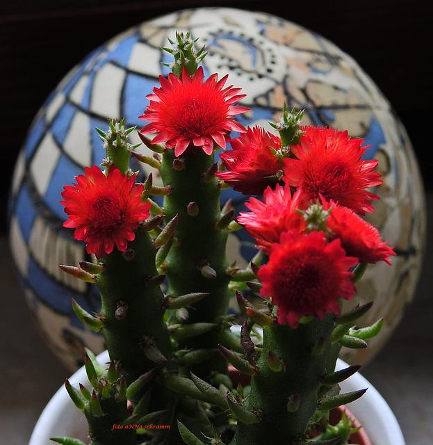 Die Reise des Kaktus' auf den Mond