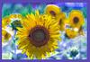 Experimentos de Van Gogh