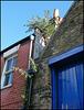 Cranham Street houseplants