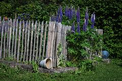 HFF - my garden